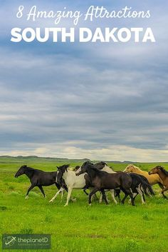 Wild Mustangs on the plains of South Dakota // 8 Amazing South Dakota Attractions | The Planet D Adventure Travel Blog