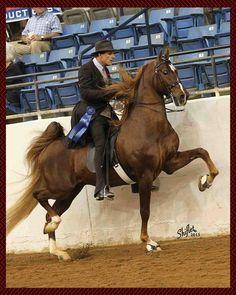 WGC Marc Of Charm English Tack, American Saddlebred, Show Horses, Champion, Needle Felting, Animals, Blue, Animales, Animaux