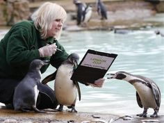 RUTERS  Zoo keeper Zuzana Matyasova poses with penguins during the annual stock take at London Zoo January 3, 2013.
