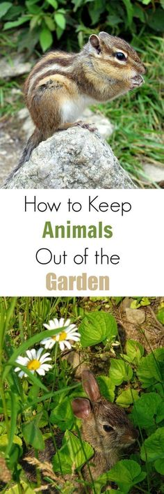 How to Keep Animals Out of the Garden