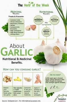 HerbaZest: We present Garlic!  Did you know that this extraordinary medicinal plant is one of the most powerful natural antibiotics in the world? It is, and that's the reason why it has been so widely used for preventing and treating illnesses for centuries. Garlic is full of nutrients, helping it treat and ward off many health conditions. This infographic show the  benefits you can gain by consuming garlic! - Tags: #garlic #benefits #nutrition #medicine #information