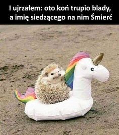 And I looked, and behold, a pale horse! And its rider's name-And I looked, and behold, a pale horse! And its rider's name was Death…. Cute Little Animals, Cute Funny Animals, Funny Cute, Hilarious, Little Pets, Funny Animal Memes, Funny Animal Pictures, Funny Memes, Funny Unicorn Memes