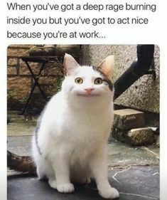 Crazy Funny Memes, Really Funny Memes, Funny Relatable Memes, Haha Funny, Funny Cute, Hilarious Memes, True Memes, Funniest Memes, Poem Memes
