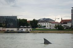 """Shark in Linz - Ambient Media campaign for the """"Schlossmuseum"""" Media Campaign, Shark, Mansions, House Styles, Home Decor, Linz, Things To Do, Decoration Home, Manor Houses"""