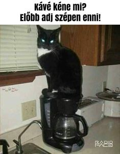 Coffee Humor: Cats like Folgers, too. Cute Cats, Funny Cats, Funny Animals, Animal Funnies, Animal Memes, Adorable Animals, Smart Animals, Crazy Animals, Animal Quotes