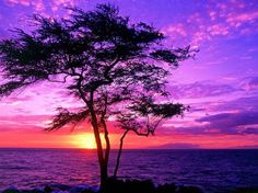 Tree silhouette in the purple sunset wallpaper, Tree silhouette in the purple sunset Nature HD desktop wallpaper Image Nature, All Nature, Amazing Nature, Nature Images, Nature Pics, Amazing Sunsets, Nature Tree, Purple Sunset, Sunset Beach