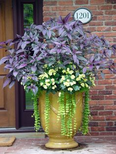 Shade to part sun container garden with amaranthus, impatiens and creeping jenny!