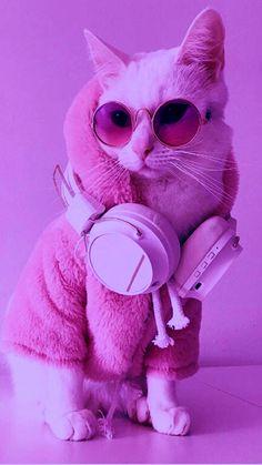 Iphone Wallpaper Themes, Cat Wallpaper, Cute Wallpaper Backgrounds, Cute Baby Cats, Cute Little Animals, Cute Babies, Puppy Clipart, Cats Tumblr, Cute Cats Photos