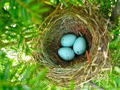 I love Springtime and the nests I find in my garden---I'm happy to think that the birds in Nature chose my garden to birth their new babies.