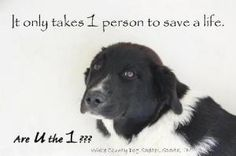 It only takes 1 person to SAVE a LIFE!  Are U the 1???  *Please Spay, Neuter & SaVe a LiFe ~ Adopt from shelter or rescue ♥
