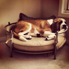 Saint Bernard... amazing dog bed!... I want IT for mine!
