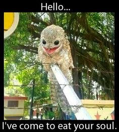 This extremely creepy/cute looking bird was found in Venezuela. It's called the great Potoo and it's real. It's rare to see one in broad daylight. Animals And Pets, Baby Animals, Funny Animals, Cute Animals, Strange Animals, Scary Birds, Funny Birds, Birds 2, Wild Birds
