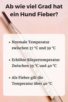 Ab wie viel Grad hat ein Hund Fieber? #Normale Temperatur zwischen 37 °C und 39 °C #Erhöhte Körpertemperaturz wischen 39 °C und 40 °C Als Fieber gilt die #Temperatur über 40 °C