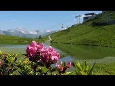 Alpenrosenrosenblüte am Fellhorn