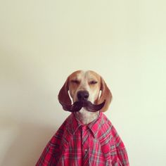 Maddie, a Talented Coonhound.  Ok, but doesn't he kind of remind you of someone we know?! Hmm?