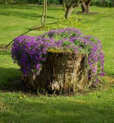 Tree Stump For Garden Art. you can use tree stumps in your garden as planters and they will give you a special charm that everyone will be admired. Tree Stump Decor, Tree Stump Planter, Tree Logs, Old Trees, Flower Planters, Garden Planters, Balcony Garden, Flower Pots, Garden Trees