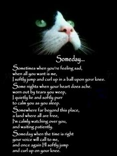 Some Nights, All About Cats, Feeling Sad, Rainbow Bridge, Book Of Shadows, Witchcraft, Feeling Down, Witch Craft, Magick