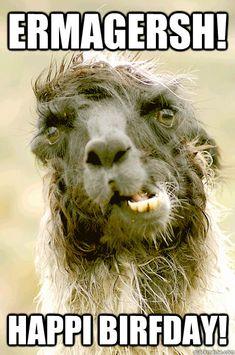 llama happy birthday meme source http car memes com happy birthday ...
