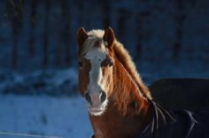 My Horse in Winter