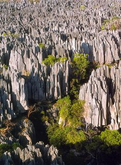 The Stone Forests of Madagascar,Tsingy de Bemaraha Strict Nature Reserve