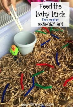 Baby Bird Eats the Worm! {fine motor sensory bin}- Baby Bird Eats the Worm! {fine motor sensory bin} feed worms to the baby birds fine motor, color sorting sensory bin from Modern Preschool - Sensory Tubs, Sensory Boxes, Sensory Play, Toddler Sensory Bins, Farm Sensory Bin, Sensory Diet, Motor Skills Activities, Preschool Activities, Creative Curriculum Preschool