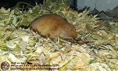 Kaninchenfan Lucky - Mein Kaninchenloch: Today it is so dark in cologne, that Sissi sleeps now (^_~)  #gerbil #rennmaus #pets #haustiere  http://kaninchenfanlucky-meinkaninchenloch.blogspot.de/2014/10/today-it-is-so-dark-in-cologne-that.html