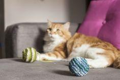 Brinquedo bolinha para gatos