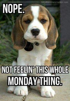 6c8d1001243366fc566b0e167a30c61b monday blues its monday good monday morning morning funny teacher memes pinterest,Good Monday Morning Meme