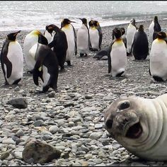 PetsLady's Pick: Funny Seal Photo Bomb Of The Day  ... see more at PetsLady.com ... The FUN site for Animal Lovers