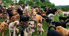 10 Amazing Ways Hunde wurden Verehrt - http://bestelisten.com/10-amazing-ways-hunde-wurden-verehrt/