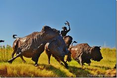 TATANKA, story of the Bison. Kevin Costner has created a wonderful tribute to the bison and Lakota Sioux indians near Deadwood, SD. Deadwood South Dakota, North Dakota, Yellowstone National Park, National Parks, Places To Travel, Places To Visit, Kevin Costner, Bison