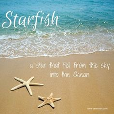 Starfish - a star that fell from the sky into the ocean