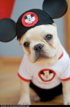 Very cute Mickey Mouse dog