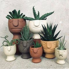 Plant decoration / Pflanzen Liebe Bester Kaktus und Sukkulent How to select the right color clothes? Cacti And Succulents, Planting Succulents, Planting Flowers, Succulent Planters, Succulent Containers, Container Flowers, Propagate Succulents, Container Plants, Succulents Garden