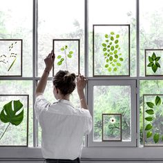 Wow!  Botanicals between glass and propped against a window.  This is so pretty!