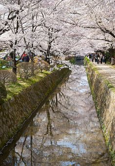 Philosopher's Walk, Kyoto, Japan ~ one of my favorite parts of the city <3