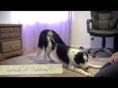 Train your dog to bow, Dog Trick. Pam's Dog Academy http://www.pamsdogtraining.com Pamela Johnson, San Diego CA Dog Dog Training too!
