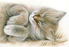 Tabbies Softie Irina Garmashova Cats