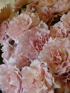 rose Forum