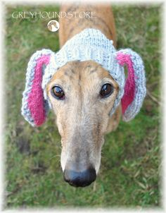 BUNNY HAT for greyhound/galgo/lurcher by Greyhoundstore on Etsy