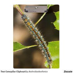 Tent Caterpillar Clipboard