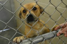 SUPER SWEET, A FAVORITE ****GASSING SHELTER*** HORRIBLE DEATH ~ ALWAYS URGENT~  NEED: DONATIONS, RESCUE, Adoption -SHARE >((( THREADS ARE DEAD )))  FUNDRAISER ON THREAD > SHELBY NC https://www.facebook.com/photo.php?fbid=623778324324013&set=a.626019477433231.1073742123.285283128173536&type=1&theater