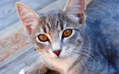 W jakim wieku kastrować kota?