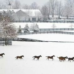 Kentucky horse country scene at winter