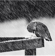 Heavy winter by Mikael Sundberg