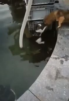 Don't worry, I'll save you - Funny Animals - Nice cat Cute Funny Animals, Cute Baby Animals, Funny Dogs, Animals And Pets, Cute Dogs, Funny Boxer, Funny Puppies, Wild Animals, Cute Animal Videos