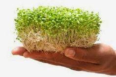 Cura pela Natureza.com.br: Aprende a fazer grãos germinados e brotos
