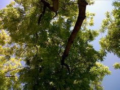 Truly an extraordinary feeling when you look at things differently. I have been lying in the grass at Zabeel Park, Dubai and look what I found....beautiful trees.