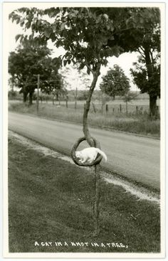 Alan Mays - A Cat In A Knot In A Tree, 2014 Photography