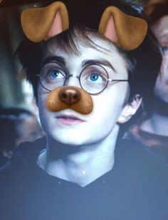 bc who doesn't need harry potter with the dog filter in their life?